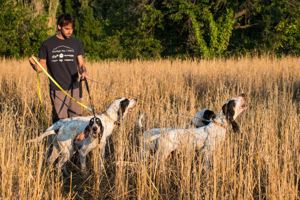 gossos de rastre