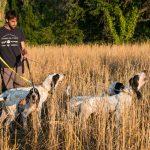 Prova de treball amb gossos de rastre sobre senglar