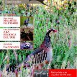 Cuidar la perdiu roja salvatge millora la biodiversitat i la qualitat de vida dels humans