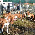 IV Encuentro de grupos del jabalí de Osona y cercanías