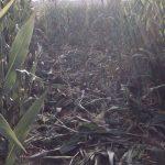 Pagesos i caçadors demanen ajuda al Govern per fer front a les sobrepoblacions