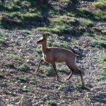 El Consell Comarcal de la Cerdanya treu a subhasta 111 permisos de caça