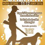 CAZAFIR celebra la 28a edició