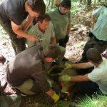 Seminari de gestió transfronterera de la fauna salvatge