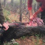 La importància de la gestió dels subproductes generats per la caça per al control sanitari animal i per a la salut pública