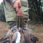 La prohibició de la tórtora: el negoci de SEO / BirdLife i els seus socis a Europa