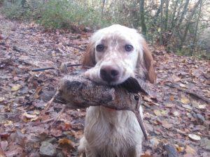 caza de becada